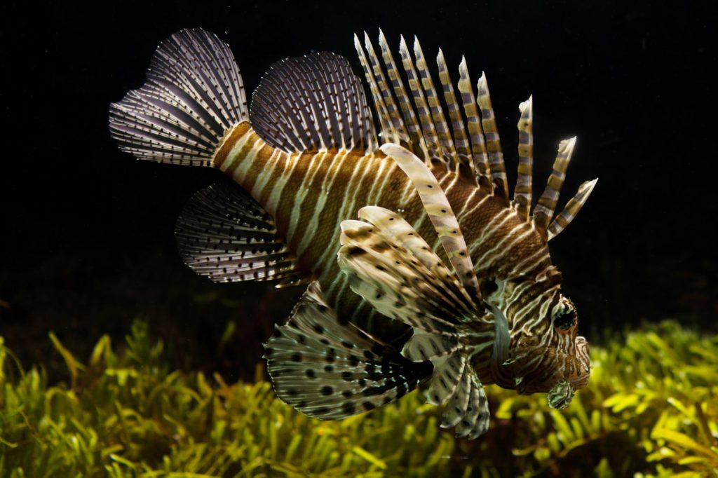 Aquarium Ornaments: Points To Remember For Selection