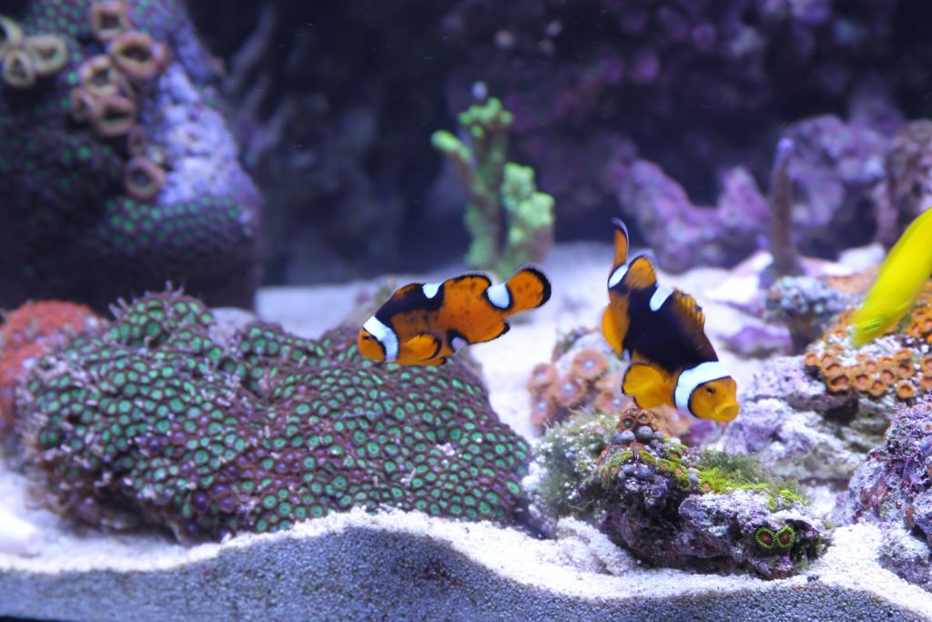What To Keep In Mind For Aquarium Decoration