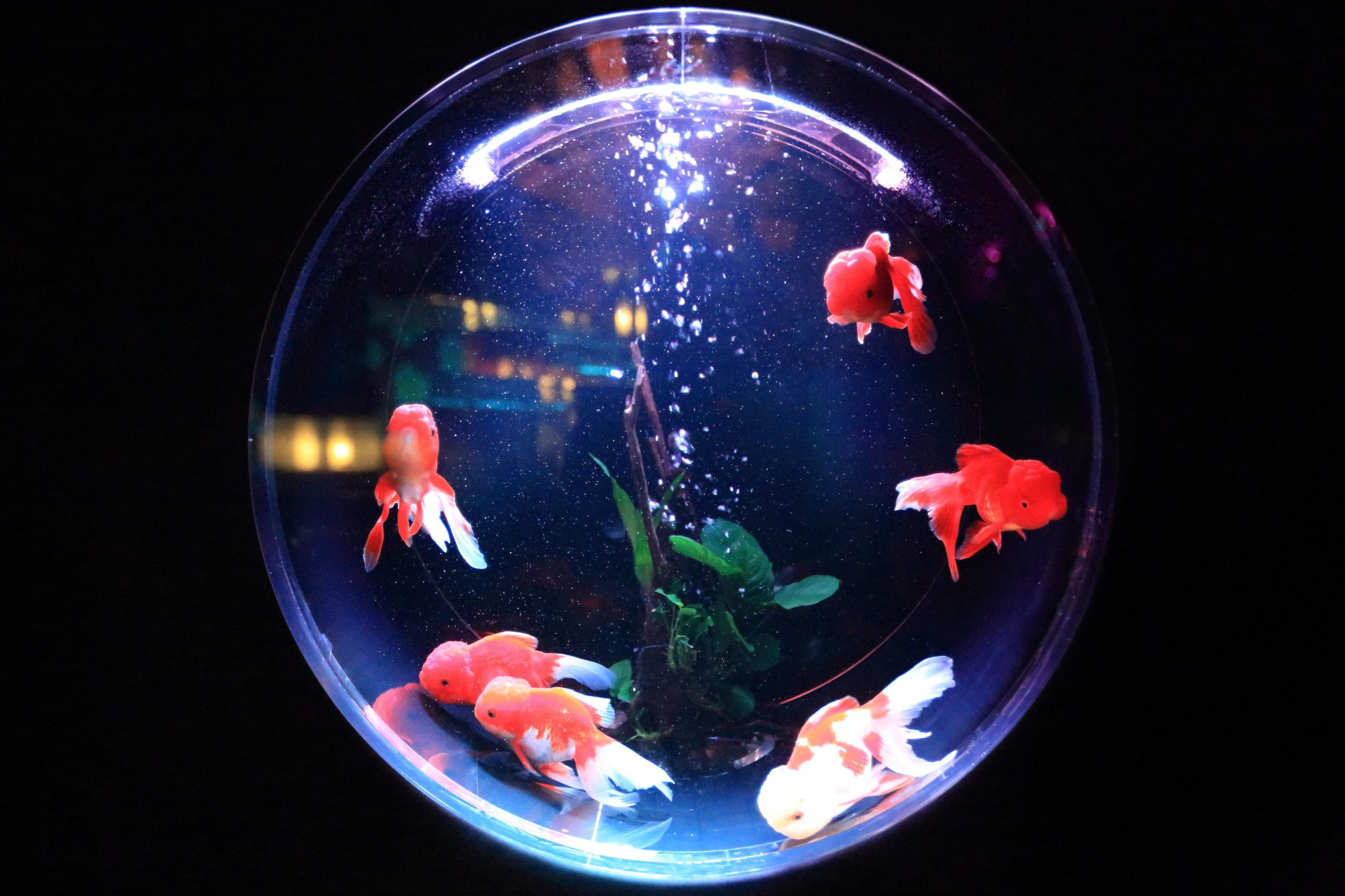 Things To Consider While Shopping For Aquarium Décor