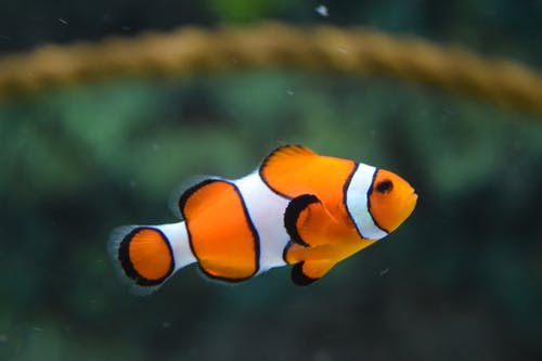 5 Things To Know About Clownfish