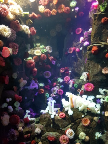 3 Important Tips To Follow For Buying 75 Gallon Fish Tank