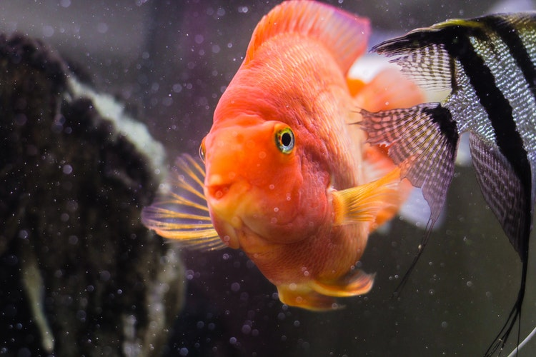 Know About Different Fresh Tropical Fish