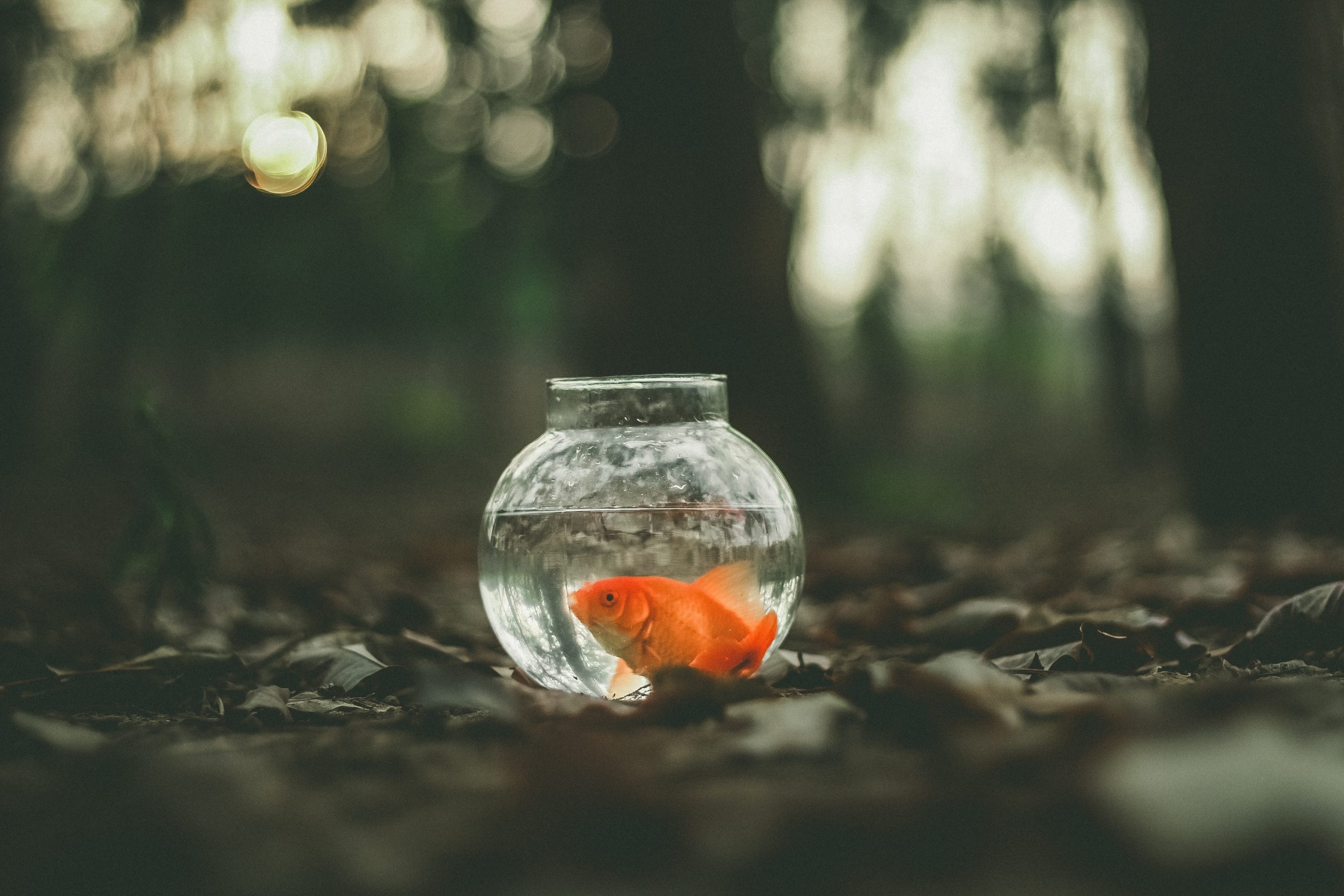 How To Buy An Ideal Fish Bowl