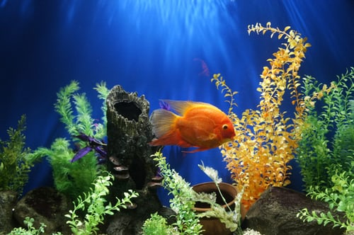 All You Need To Know About Aquarium First Aid