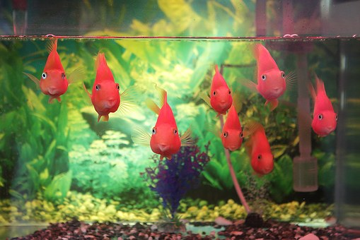 Aquarium Water Chemistry: What Do You Know