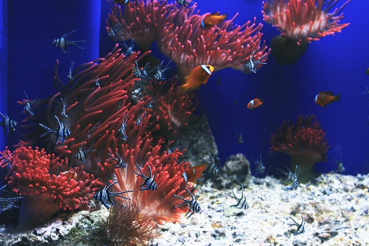 Ocean Running Out of Fish - All You Should Know About It